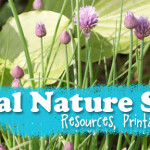 Herbal Nature Studies