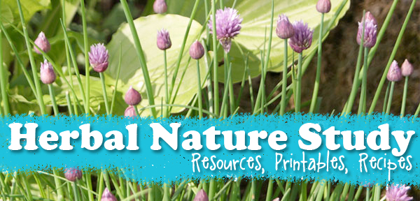 Herbal Nature Study Resources, Printables and Recipes from Muse of the Morning